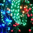 News, Shelby, Zoo Lights, Dec. 2014