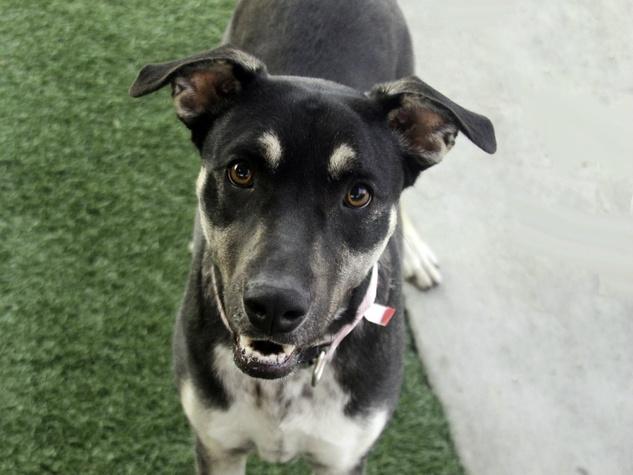 Dallas Dog Adoption Spca
