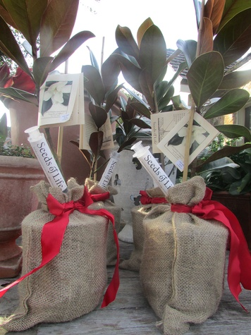 Ready to Jingle plants as gifts December 2014 magnolia trees at Thompson & Hanson