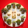 sissy's southern kitchen, lisa garza, diffa wreath collection