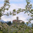 On the Market Castel Valer in northern Italy near Milan May 2014 through trees