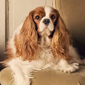 Cutest pet photos — ever! — adorn SPCA adoption window at ...  Pearland