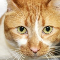 Picture this Pet - Austin Pets Alive - Orange Julius 1 - May 2015