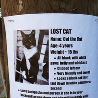 missing cat montrose coyote serial killer