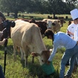 News_Beef_Field_Cindy_Oct_2013