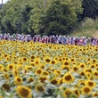 News_Tour de France_flowers