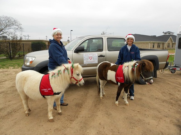 Austin Photo Set: News_Jessica Pages_minis and friends_mini horses_Dec 2011_1
