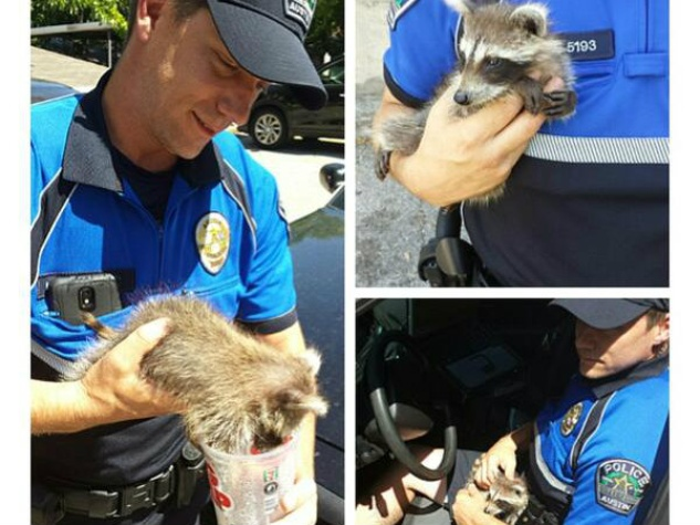 APD officer rescuing pet raccoon from hot car in Austin
