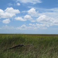Louisiana scene after BP oil spill