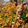 Picture this Pet - Austin Pets Alive - Choco 1 - May 2015