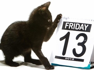Austin photo: News_Mike_Friday the 13th_Kitten