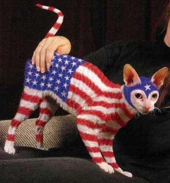Austin photo: News_Patriotic Pets_Painted Cat