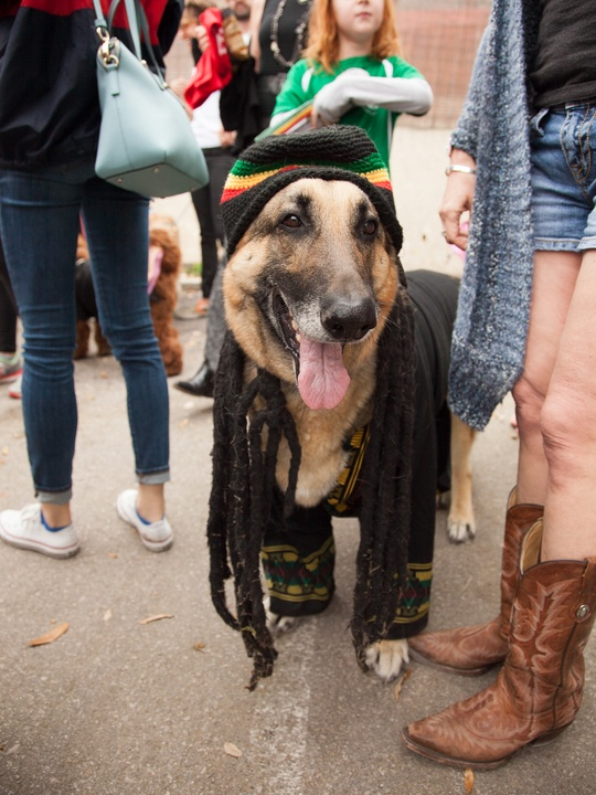 Jo's 16th Annual Pet Parade in Austin 3rd place Ziggy Marley Dog Costume