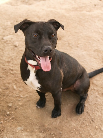 Picture this Pet - Austin Pets Alive - Pancho 3 - February 2015