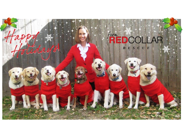 News_Katie_Red Collar Rescue_Christmas card_Charlotte Liberda