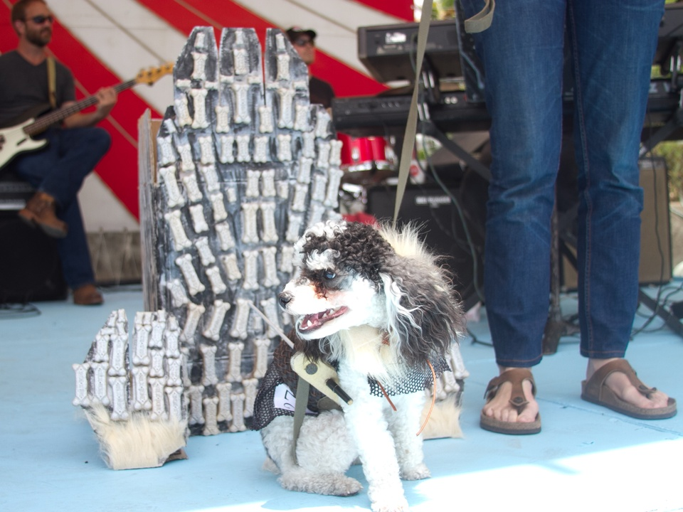 Easter Pet Parade on South Congress 2014 Iron Throne Jon Snow Game of Thrones