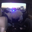 Jose Canseco's goat wearing a diaper in the back of his car getting pulled over by cop