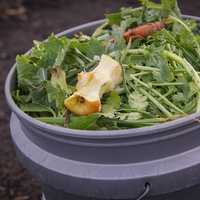Photo of kitchen scraps in Bokashi bucket,