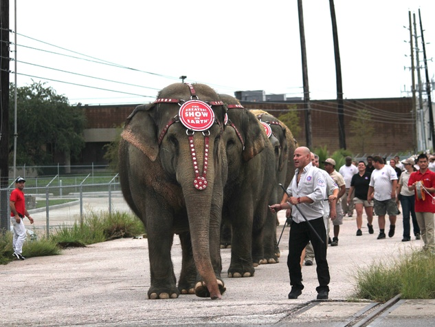 Ringling Bro. Circus, Elephants leading, July 2012