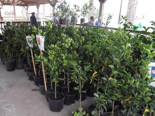 Urban Harvest's 13th Annual Fruit Tree Sale