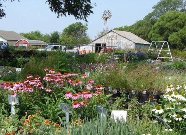 The Top Nurseries And Garden Shops In Dallas And Beyond
