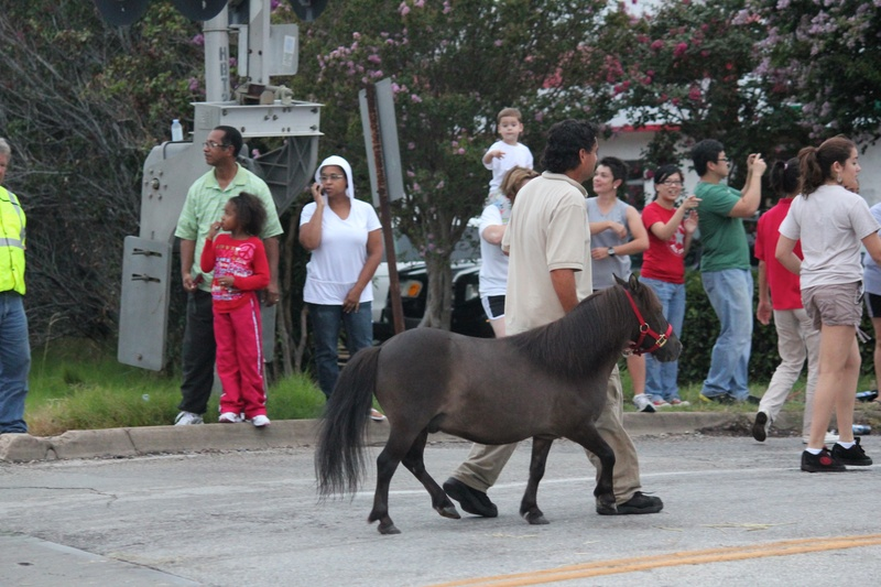 Ringling Bros, Circus, Arriving to town, Minature Horse, July 2012