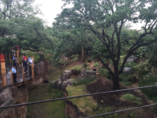 Houston Zoo, View from The Nau Family Gorilla Treehouse, May 2015