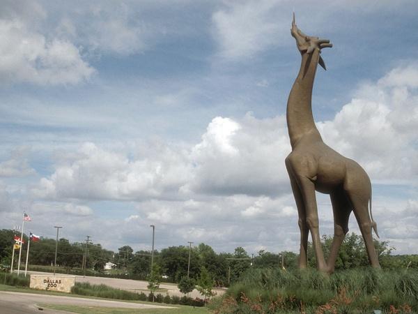 City Seeks Companion For Iconic Dallas Zoo Giraffe