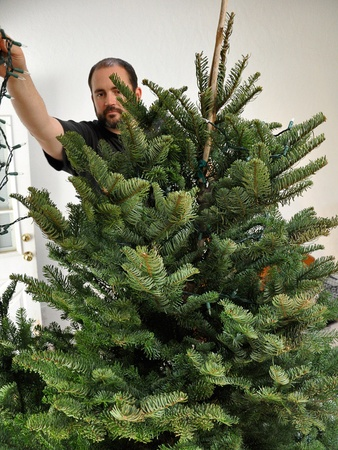 News_Amber Ambrose_Christmas tree_beginning