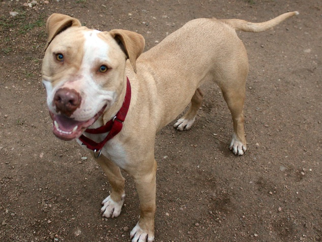 romeo the dog from APA! pet of the week standing