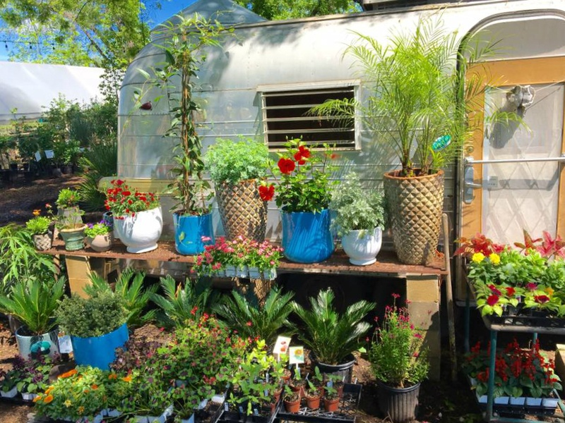 Slideshow Our Favorite Austin Garden Shops For Stylish Succulents And All Things Green
