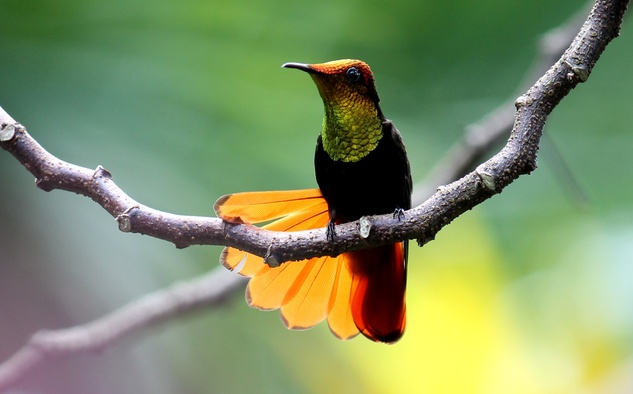 Stephan Lorenz Trinidad travel February 2015 Trinidad is home to many natural splendors, but the variety of hummingbirds and ease of observing them is worth the trip
