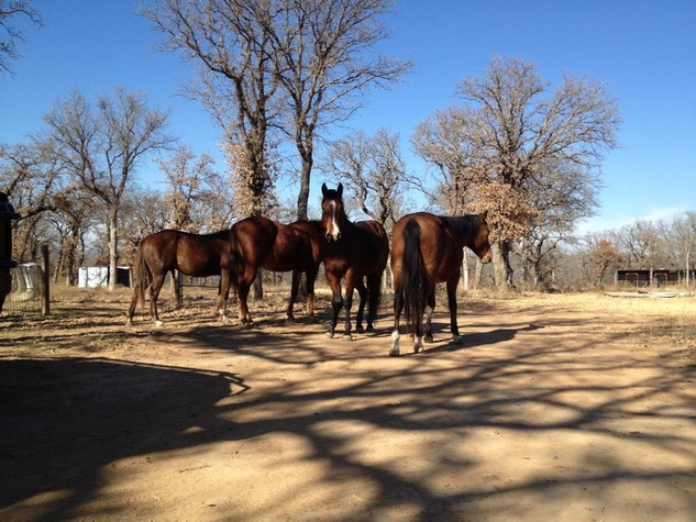 Horses on Olympian Ranch