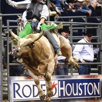 News_RodeoHouston_bronco_cowboy