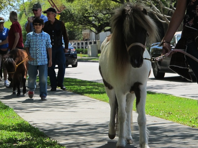 1 Katie Oxford Blessing of the Animals at Bellaire United Methodist March 2015 Miniature ponies - Lady leading and Sugar Foot