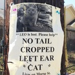 Montrose missing cat poster