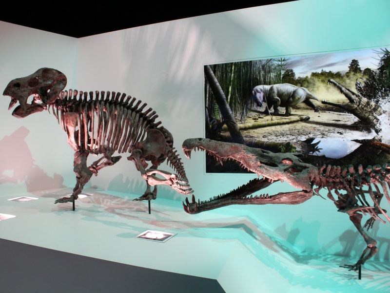 HMNS_Hall of Paleontology