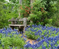 Whole food poll: Lady Bird Wildflower Center