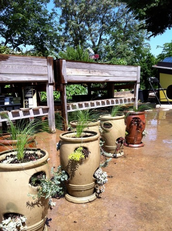 Potted plants at Promise of Peace Garden