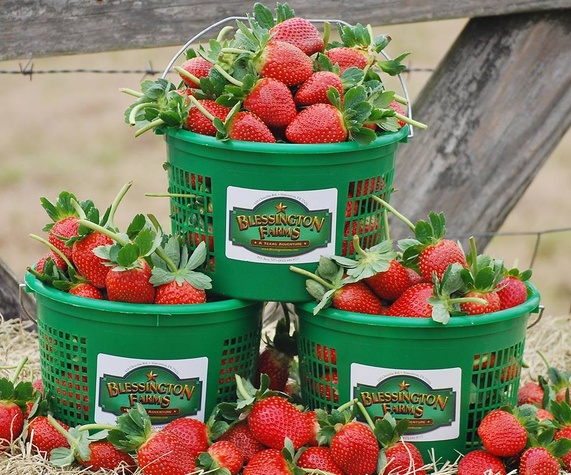 Blessington Farms Strawberries