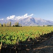 Puente Alto Vineyard in upper Maipo for don Melchor wine