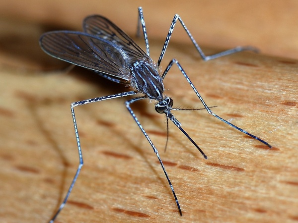 How To Survive Mosquito Season In Austin 6 Natural Remedies That Work Culturemap Austin,Should I Paint My Ceiling Beams White